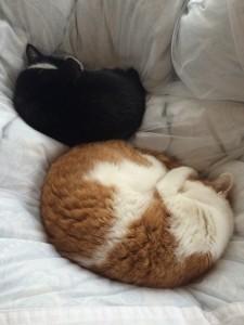 ベッドの上で熟睡するテキーラとピクシー