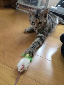 おもちゃに釣られて出てきたアビーちゃん