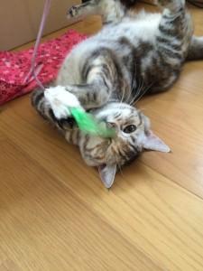 おもちゃで夢中で遊ぶアビーちゃん