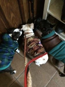 すっかり冬支度でお散歩を待っている3匹
