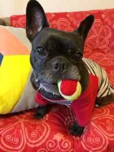 ボールをくわえてご満悦なハンナちゃん