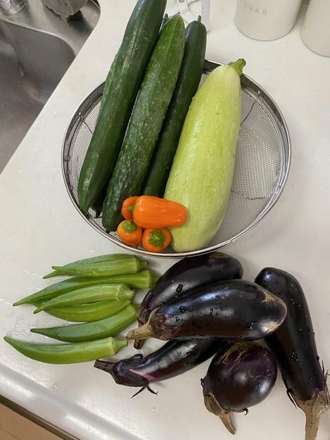 夏野菜の収穫とごはん